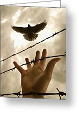 Hand Reaching Out For Bird Greeting Card