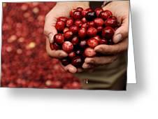 Handful Of Fresh Cranberries Greeting Card