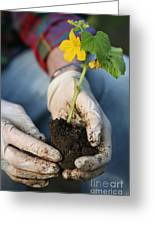 Hands Planting Plant Greeting Card