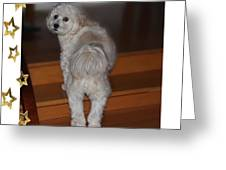 Handsome Havanese Pup Greeting Card