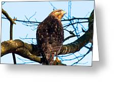 Handsome Hawk Greeting Card