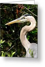 Handsome Heron Greeting Card