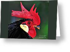 Handsome Rooster Greeting Card