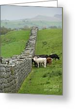 Hangin Out At Hadrians Wall England Scotland Greeting Card