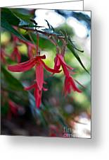 Hanging Asian Lillies Greeting Card