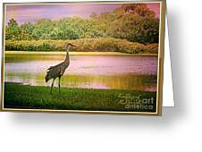 Hanging Around The Beautiful Florida Sand Crane Greeting Card