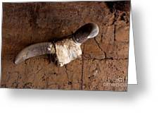 Hanging Cow Horns-africa Greeting Card