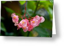 Hanging In Pink Greeting Card