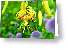 Hanging Lily Greeting Card