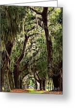 Hanging Moss And Giant Oaks Greeting Card