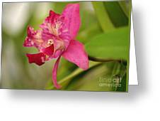 Hanging Orchid Greeting Card