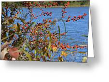 Hanging Over The Lake  Greeting Card