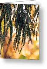 Hanging Pine Greeting Card