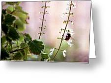 Hanging Pot With Bee Greeting Card