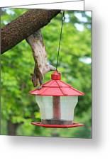 Hanging Squirrel Greeting Card