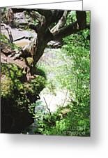 Hanging Tree Greeting Card