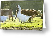 Hanging With The Herd Greeting Card
