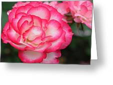 Hannah Gordon Floribunda Rose Greeting Card