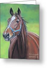 Hanover Shoe Farm Horse Greeting Card