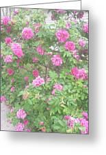 Hansa Roses Greeting Card