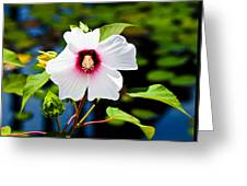 Happiness Shared Is The Flower Greeting Card by Christi Kraft