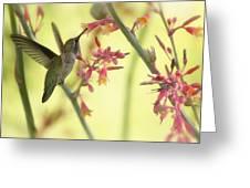 Happy As A Hummingbird  Greeting Card