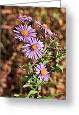 Happy Asters Greeting Card