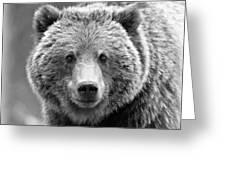 Happy Bear Greeting Card