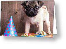 Happy Birthday Cute Pug Puppy Greeting Card