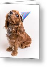 Happy Birthday Dog Greeting Card by Edward Fielding