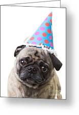 Happy Birthday Pug Card Greeting Card