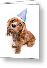 Happy Birthday Puppy Greeting Card by Edward Fielding