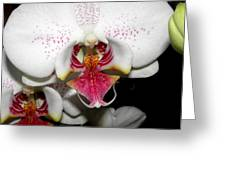 Happy Blooms Greeting Card