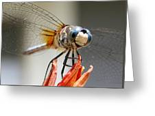 Happy Dragonfly Greeting Card