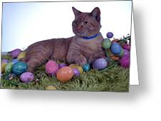 Happy Easter Greeting Card by Michael Sokalski