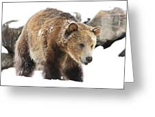 Happy Grizzly Bear Greeting Card