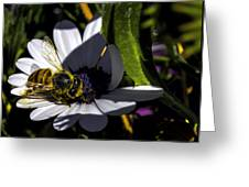 Happy Honey Bee Greeting Card