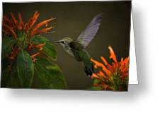 Happy Little Hummingbird  Greeting Card