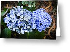 Happy Hydrangea Greeting Card