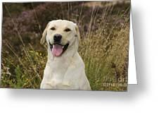 Happy Labrador Greeting Card