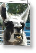 Happy Llama Greeting Card