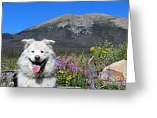 Happy Mountain Dog Greeting Card