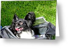 Happy Papillon In A Bag Greeting Card