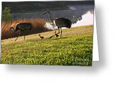 Happy Sandhill Crane Family - Original Greeting Card