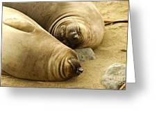 Happy Seals Greeting Card
