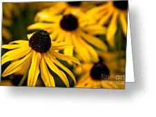Happy Susans Greeting Card