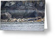 Harbour Seals Resting Greeting Card