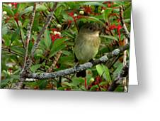 Hardly The Least Least Flycatcher Greeting Card