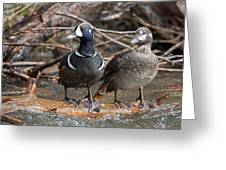Harlequin Pair Greeting Card