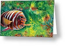 Harlequin Tuskfish Greeting Card